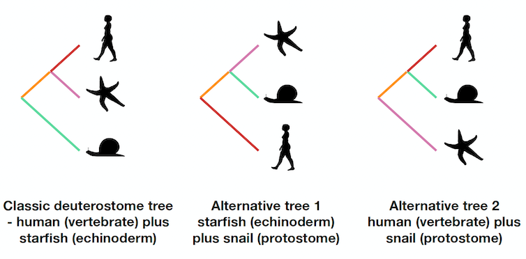 Drawings of the three possible trees.