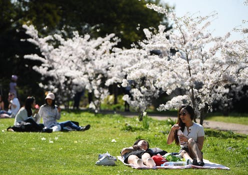 Two pairs of women relax in a sunny park under cherry blossom trees.