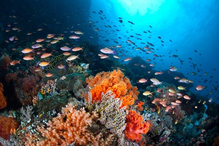 Un banc de poissons entoure un récif corallien tropical