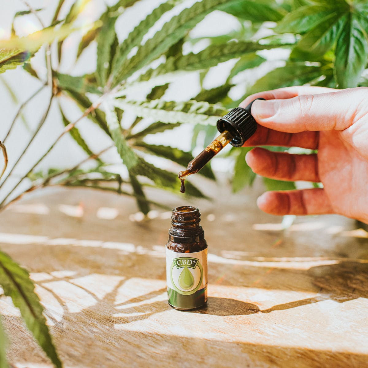 CBD, marijuana and hemp: What is the difference among these cannabis  products, and which are legal?