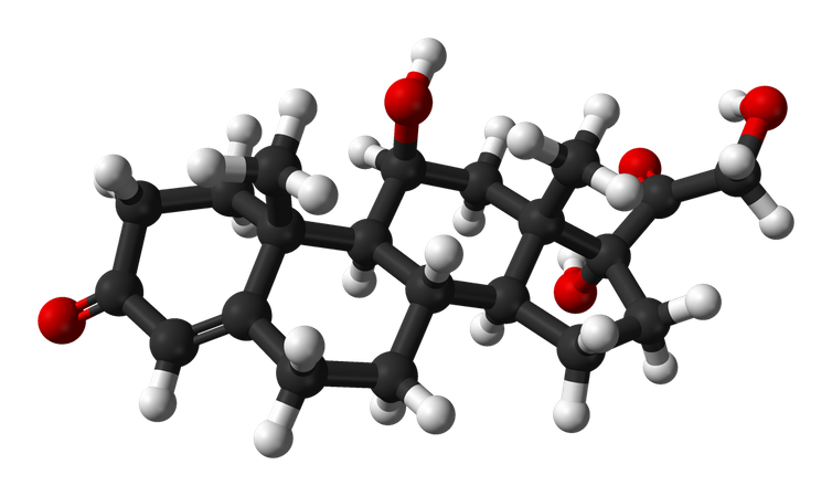 A 3D model of cortisol