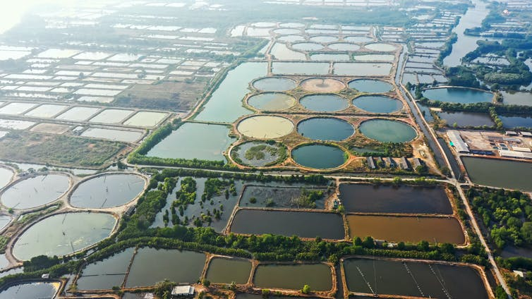An aquaculture farm