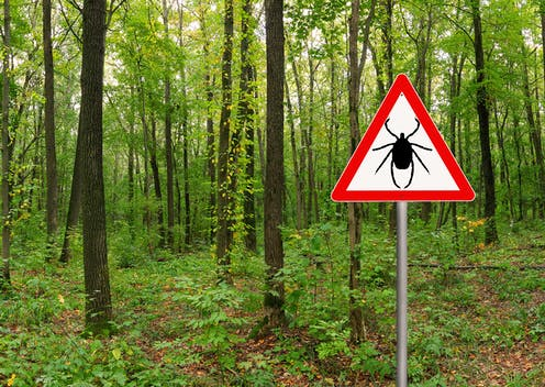 A forest with a sign in the foreground showing a tick in a caution triangle