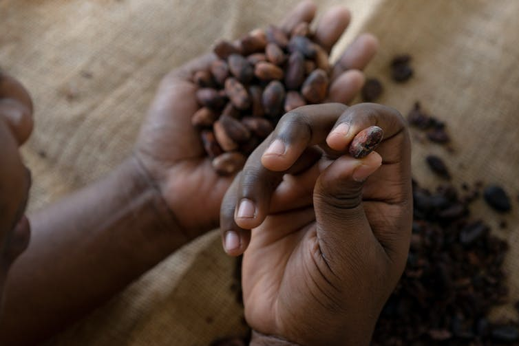 Most cacao farmers earn less than US$1 a day.