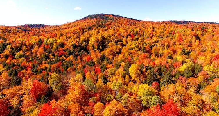 Aerial view of autumn foliage.