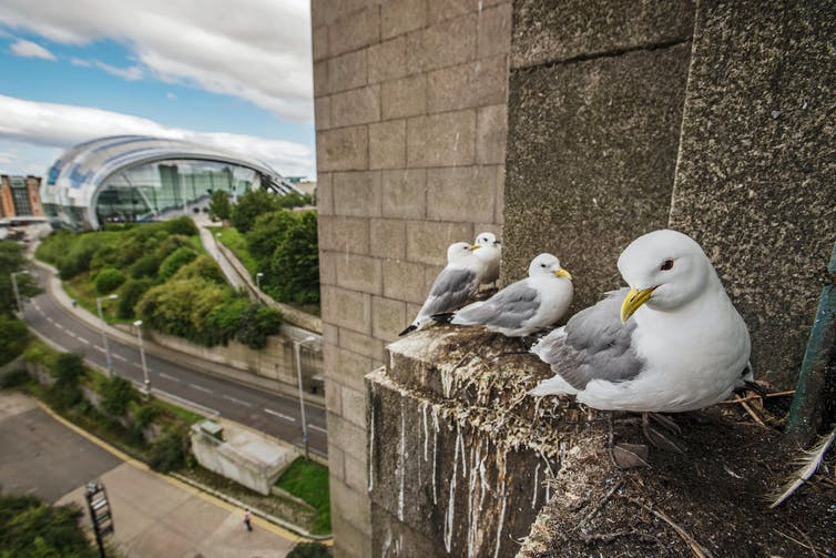 Four birds resembling seagulls nestle on a stone ledge with the city behind them.