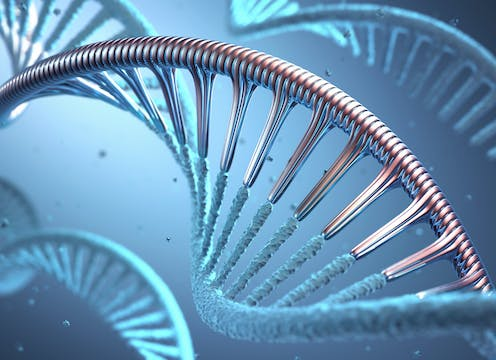 artist's rendition of RNA paired up with DNA strand