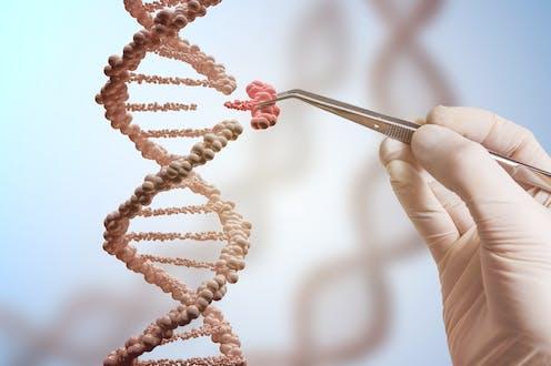 Image d'une maquette d'ADN avec une main gantée qui installe un nucléotide en le tenant par avec une pince à disséquer