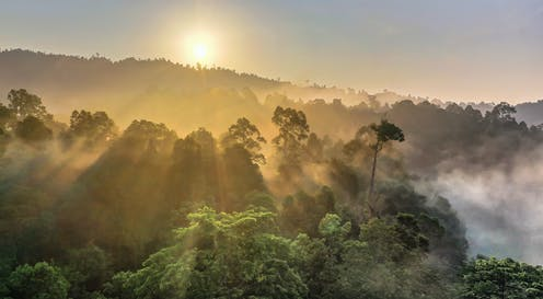 Sun sets on a tropical rainforest.