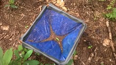 A blue basket with dead leaves in it.