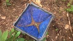 Una canasta azul con hojas muertas.