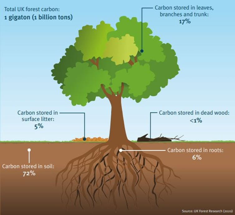 A graphic of a tree showing carbon storage.