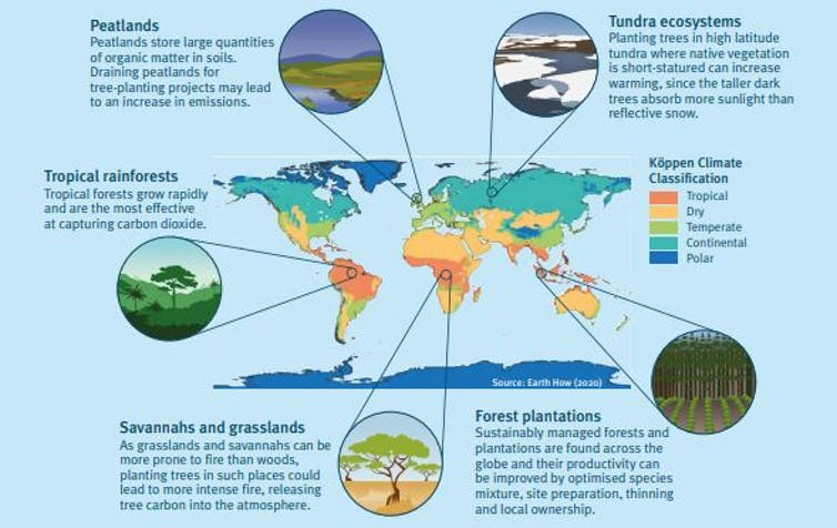 Graphic showing how tree planting in different climate zones affects ecosystems.