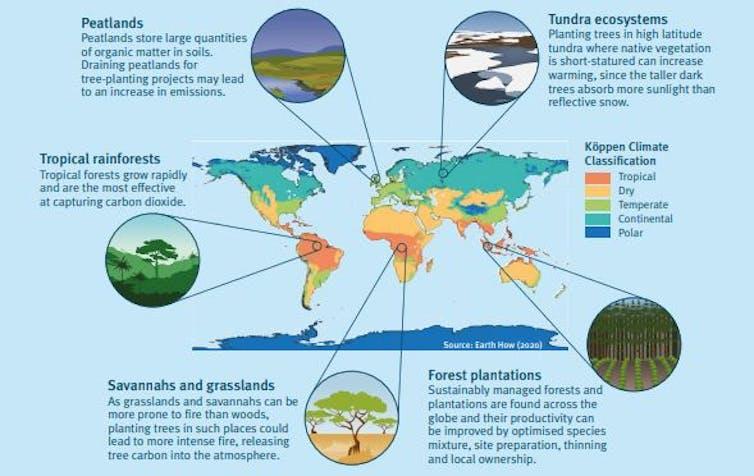 Gráfico que muestra cómo la plantación de árboles en diferentes zonas climáticas afecta a los ecosistemas.