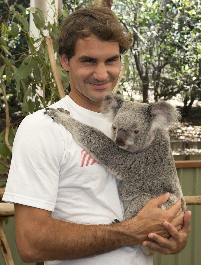 Fuzzy words endanger koalas' lives and habitat - photo#18