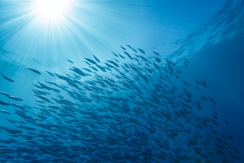 A school of fish in sunlit water