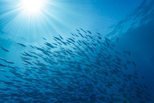 A school of fish in sunlit water