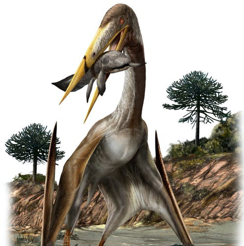 Largest ever flying creatures had longer necks than giraffes – we found out how these pterosaurs kept their heads up