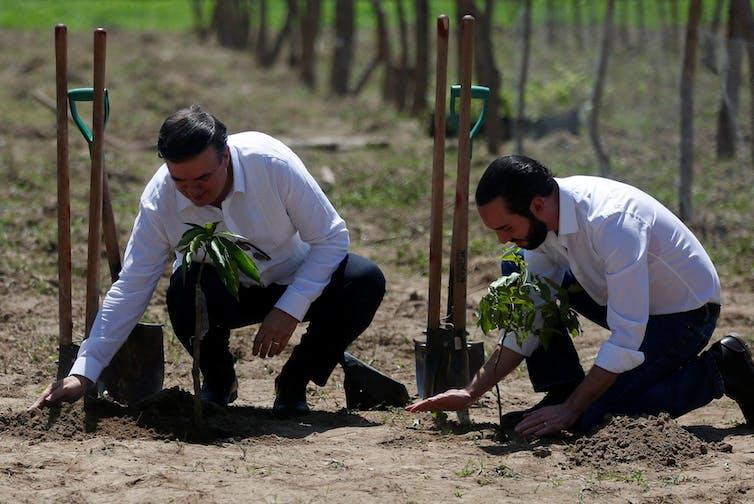 Dos hombres plantan árboles jóvenes.