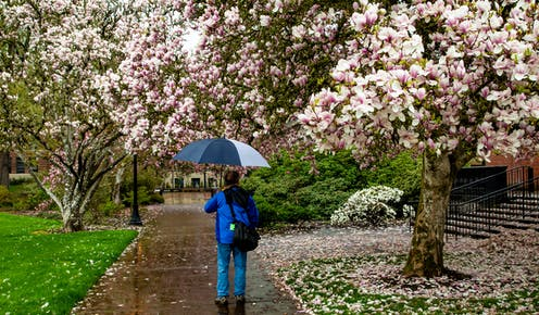 A man walking with umbrella on campus.
