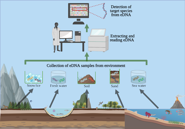 A flowchart of how snow/ice, freshwater, soil, sand or seawater samples can be collected and analyzed for their DNA.
