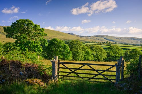 A gate encloses an empty field bordered by a stand of trees.