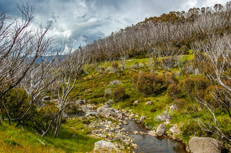 Regenerating plants and burnt trees in fire-damaged alpine region