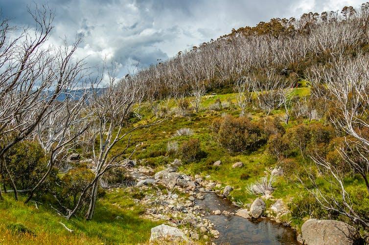 Regenerating plants and burnt trees in fire-damaged alpine region