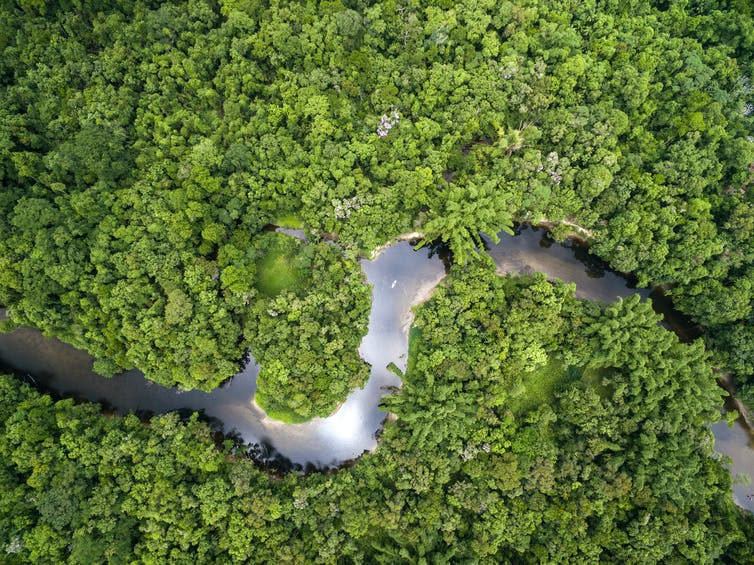 An aerial view of the Amazon forest and river.