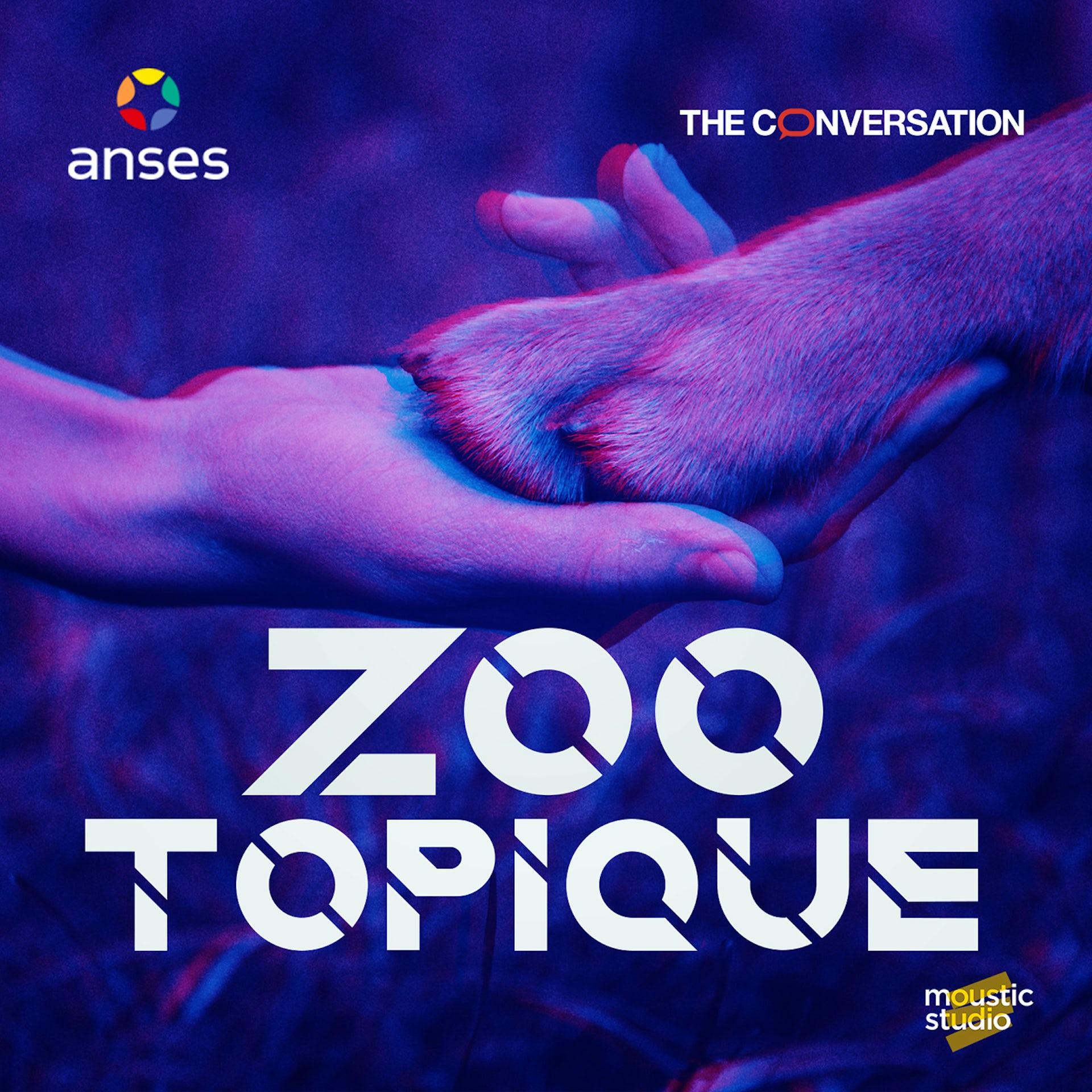 « Zootopique » :  Vivra-t-on, enfin, en harmonie avec les animaux en 2031 ?