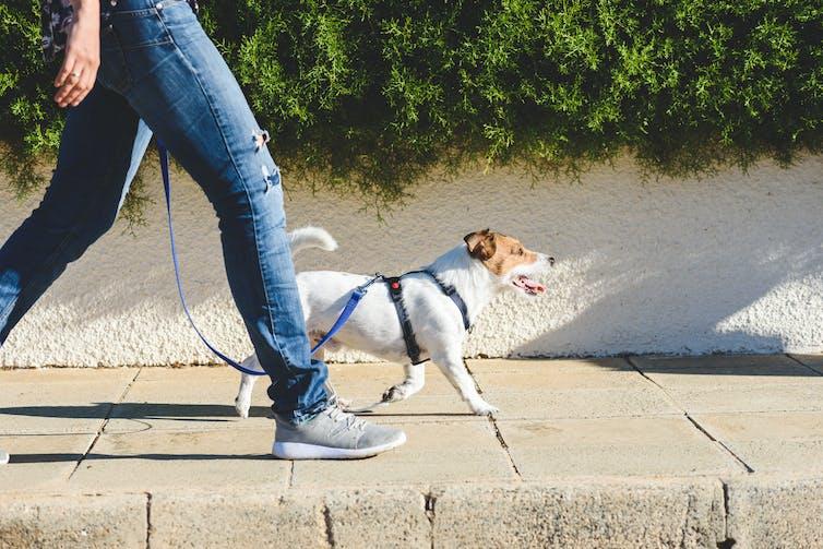 A man walking a dog