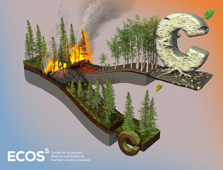 Illustration of forests and carbon storage above and below ground