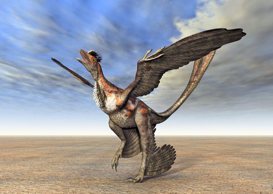 Artist illustration of a microraptor.