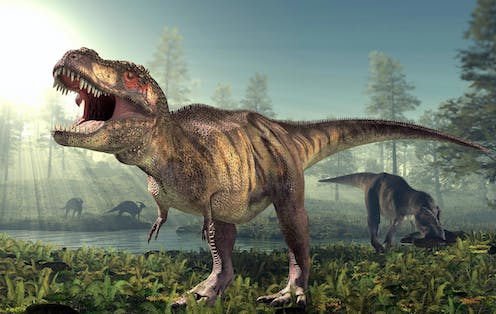 An artists rendering of two T. rex with one eating another dinosaur.