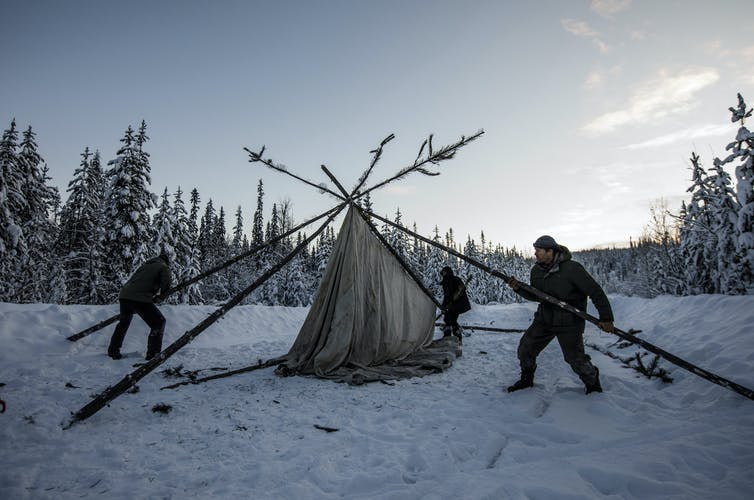 Three people use tree trunks to raise a shelter