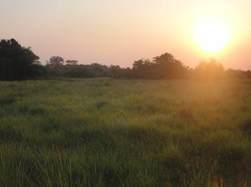 Image of grassland in Uganda.