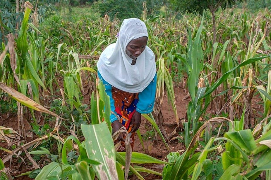 Woman in maize field