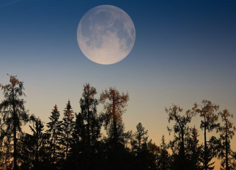 Luna piena sopra gli alberi.