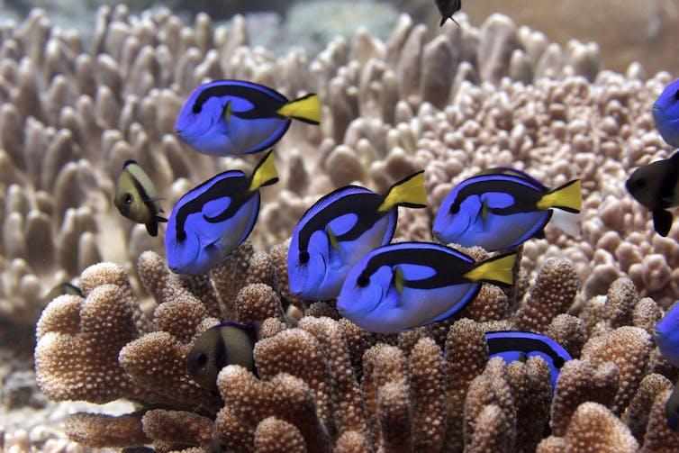 Fish swimming amid coral