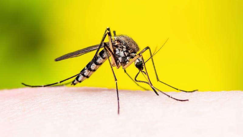 Las vacunas de la covid-19 demuestran lo rápido que se podría desarrollar una contra la malaria