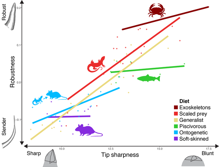 Graph showing variation in fang robustness and tip sharpness across snake diets
