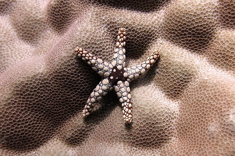 Starfish on a coral