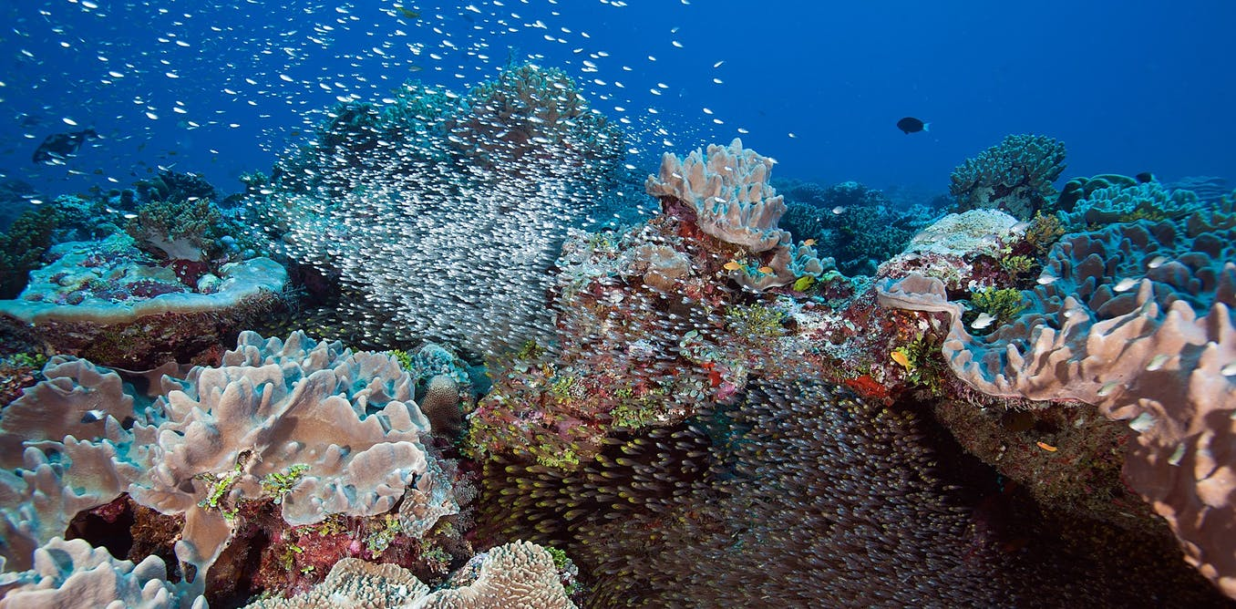 Watching a coral reef die as climate change devastates one of the most pristine tropical island areas on Earth