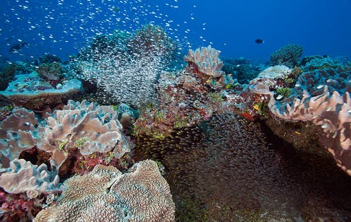 Schools of fish stream out from among the corals