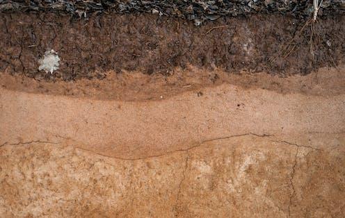 Corte vertical de un suelo.