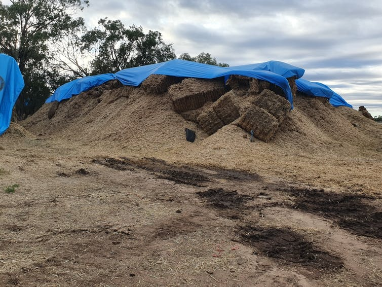 A haystack with a blue tarp over it