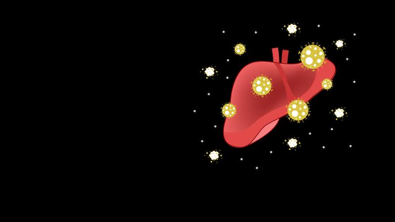 Así afecta la infección por coronavirus al hígado