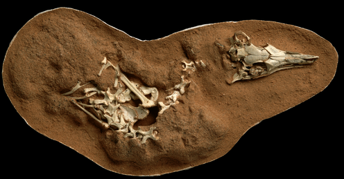 An oblong piece of brown dirt with a small skeleton half unburied.