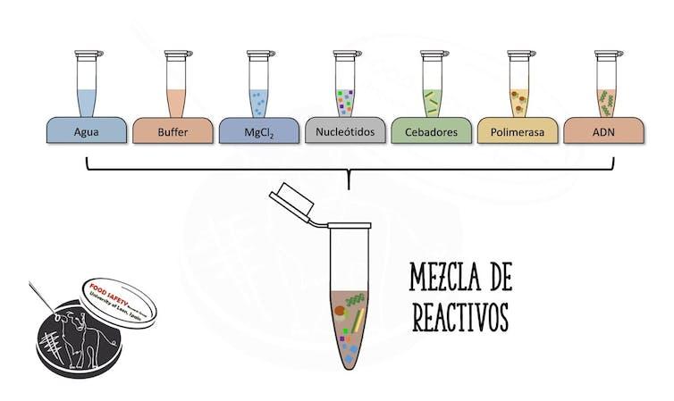 >Esquema de los componentes de una PCR