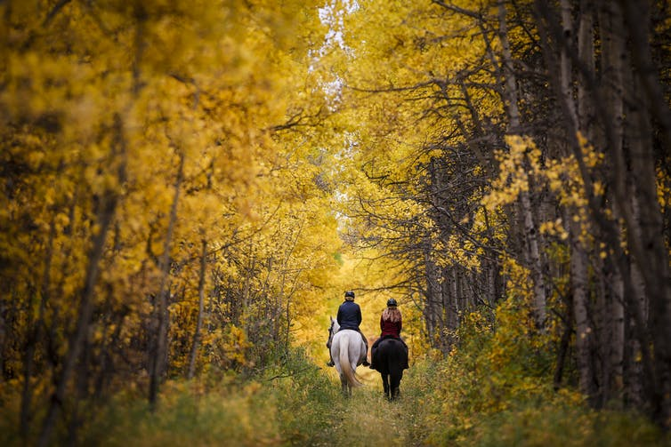 Riders and their horses pass through autumn colours